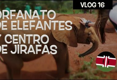 orfanato elefantes centro jirafas kenia