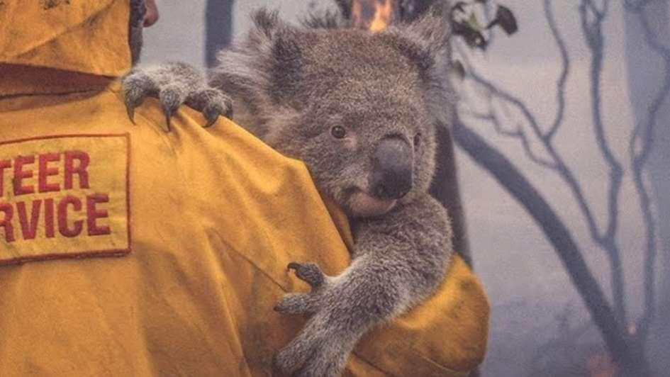 Incendios En Australia C U00f3mo Ayudar Viajeros 360 Blog